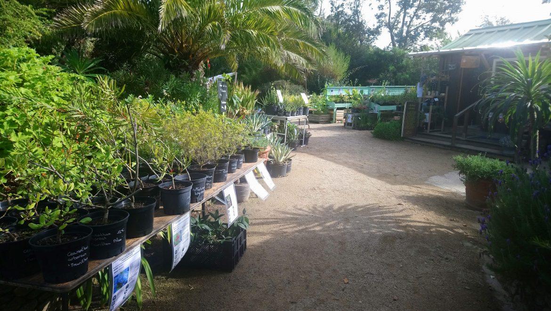 Déstockage de plantes automnal 2019